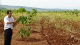 F-Rubber-plantation-Attapeu2