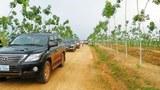 F-Vietnam-rubber-farm