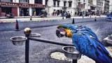 蓝鹦鹉.jpg