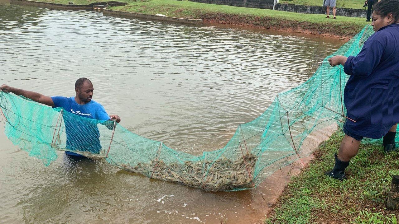 台湾援助斐济水产业。(Taiwan In Fiji脸书)