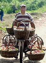 CHINA-APPLES-150.jpg