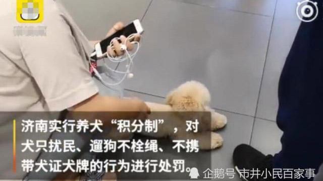 新年过后济南市政府有意制定养犬新规,以解决遗弃犬只、处理犬粪、遛狗牵绳等问题。(Public Domain)