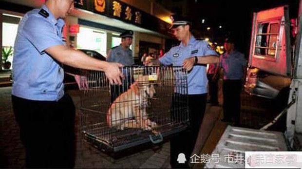 济南拟立新规    遗弃狗将被罚两千