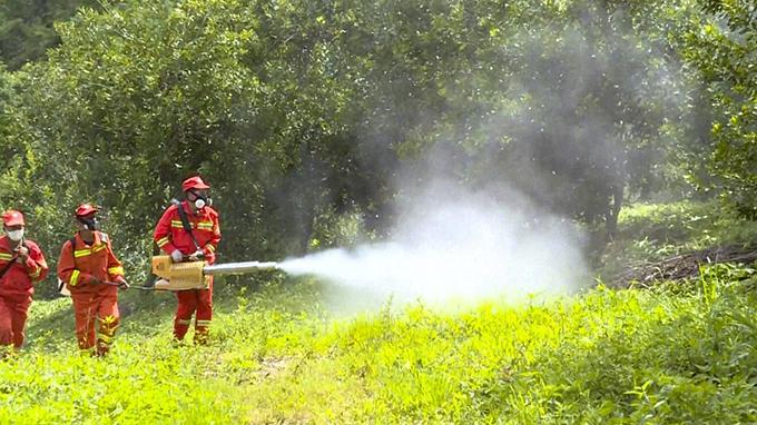 中国林业工人正在喷洒杀虫剂以控制蝗灾(视频截图)