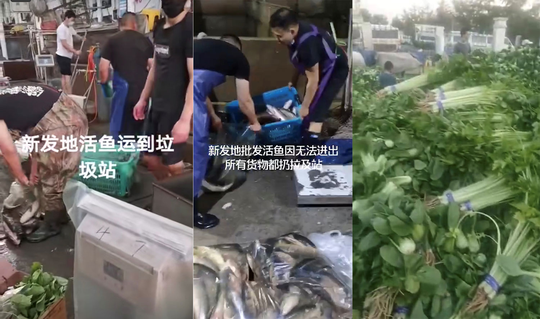 左中图:新发地农产品批发市场商户销毁活鱼。右图:新鲜蔬菜需要销毁。(视频截图)