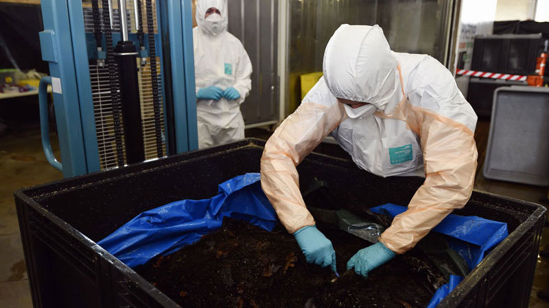 中国受到非洲猪瘟影响,大量生猪被灭杀,导致猪肉价格上涨。图为比利时研究人员检测野猪是否感染非洲猪瘟病毒。(AFP)