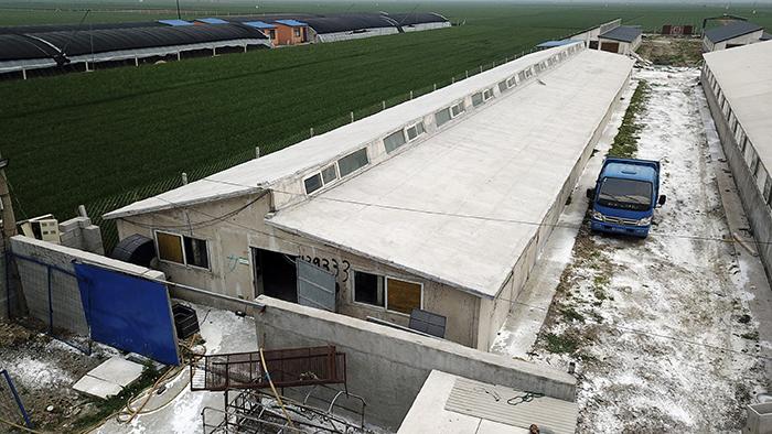为控制猪瘟,河北省的一家养猪场2019年5月8日在进行消毒。(美联社)