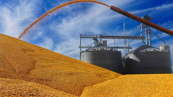 美国伊利诺伊州一家农场收获的玉米(美联社)