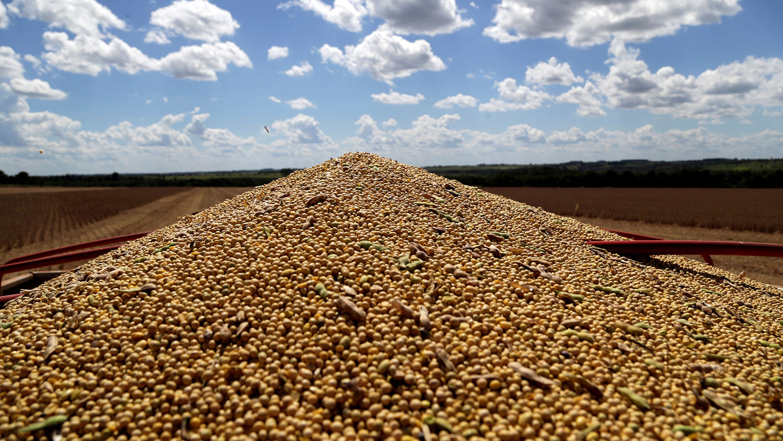 据报中方9月12日已购买60万吨大豆,并将在10至12月付运,这是六月以来,中美两国最大宗大豆交易。(路透社)