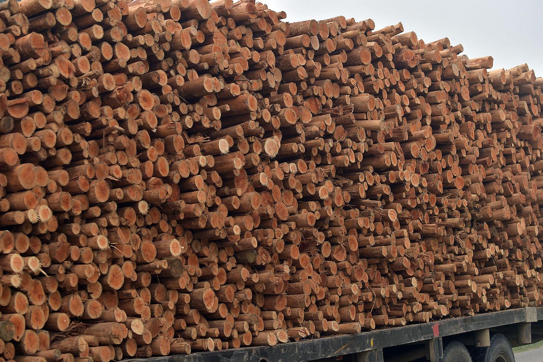 中国木浆进口量在去年达到三千多万吨,进口木浆占木浆总消耗量的七成以上。(法新社图片)(photo:RFA)