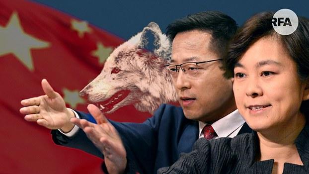 战狼与可爱中国形象相抵触?(自由亚洲电台制图)