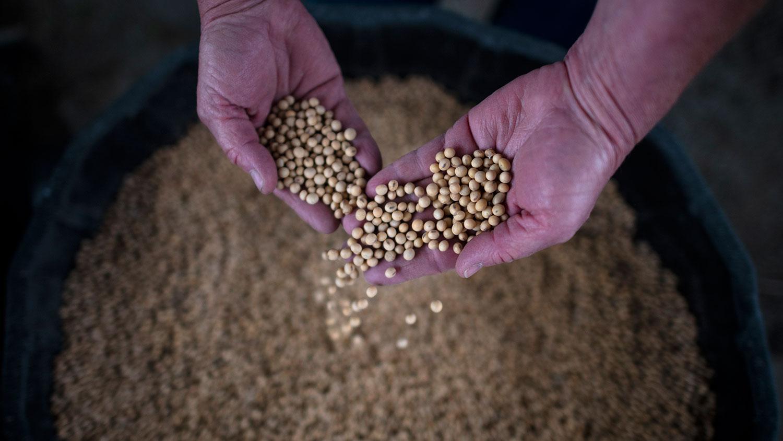 中国对美国农业的依赖性也非常强,像是大豆,中国大豆自己生产只是1400万吨,而进口9554万吨。(资料图/法新社)