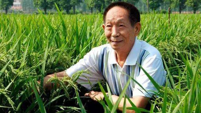 """中国的""""杂交水稻之父""""袁隆平(Public Domain)"""