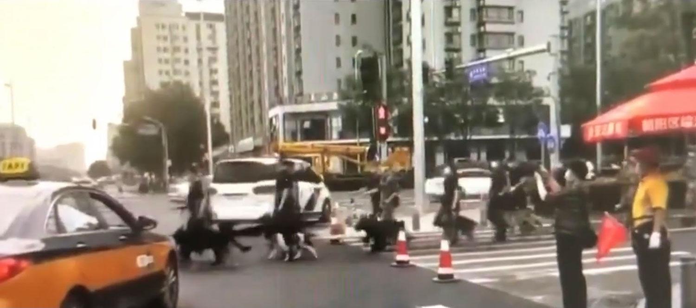 网民拍摄到北京一路口,警察牵着警犬经过马路。(视频截图)