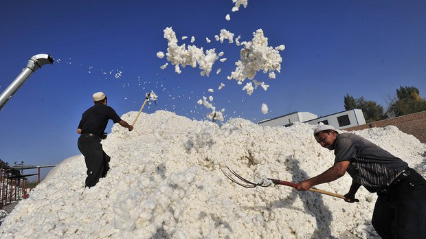 新疆是中国棉花的主要产区之一(法新社)
