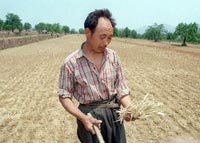 HENAN-ANYANG-FARMER-200.jpg