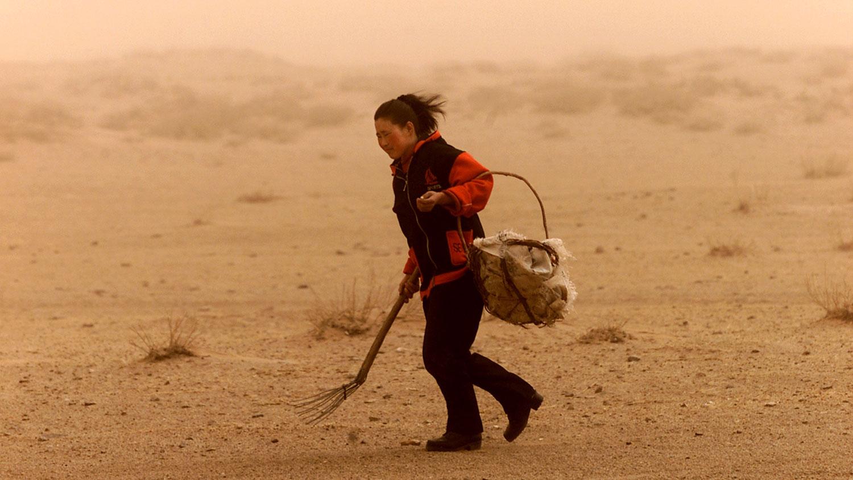 图为,内蒙古自治区锡林郭勒盟,一名蒙古妇女在一场沙尘暴中寻找牛粪作为燃料。(路透社)