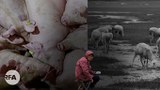 第一集:内蒙古全区脱贫摘帽 风吹草低不见牛羊(自由亚洲电台制图)