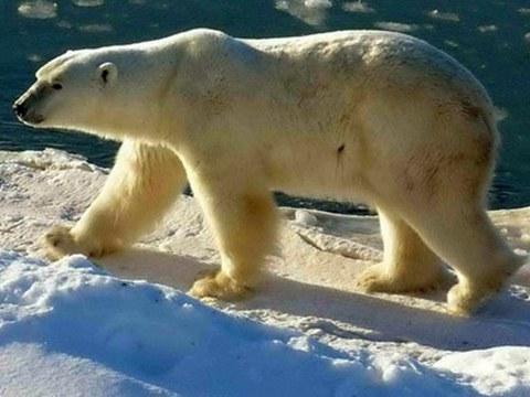 美俄进入全新对抗时代。美国开始与北极熊共舞。