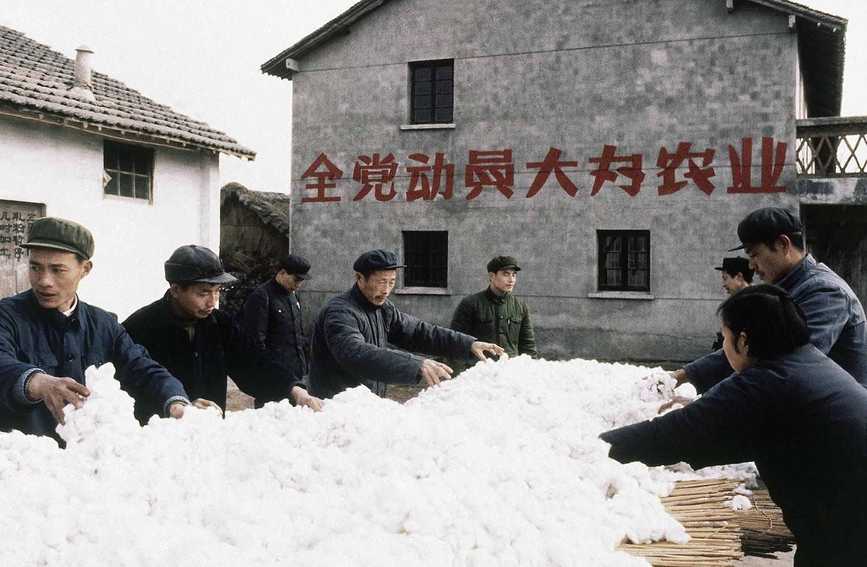 """新疆被培植为""""棉花大省"""",却忽略了人权和环境成本。(美联社)"""