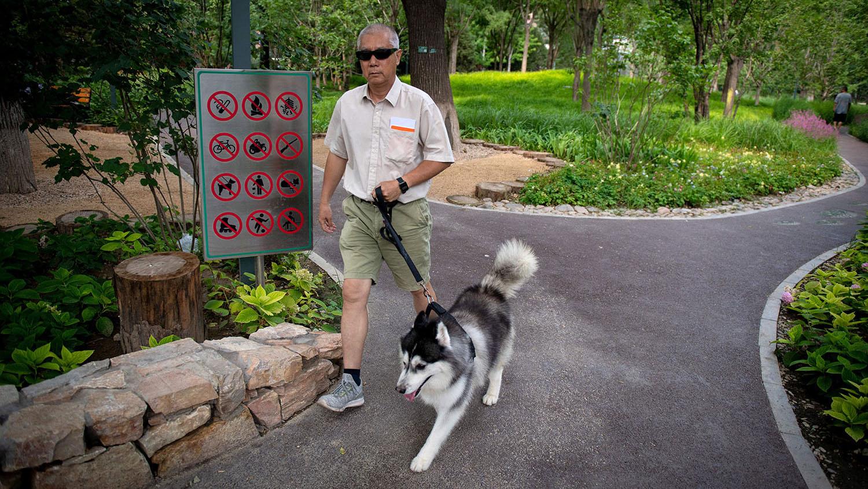 中国的宠物犬高达5,500多万只,遛狗地点和时间都被严格设限。(法新社)