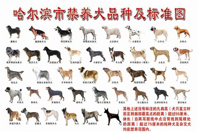 """中国的""""禁犬黑名单""""完全与世界标准脱轨。(翻摄自网络)"""