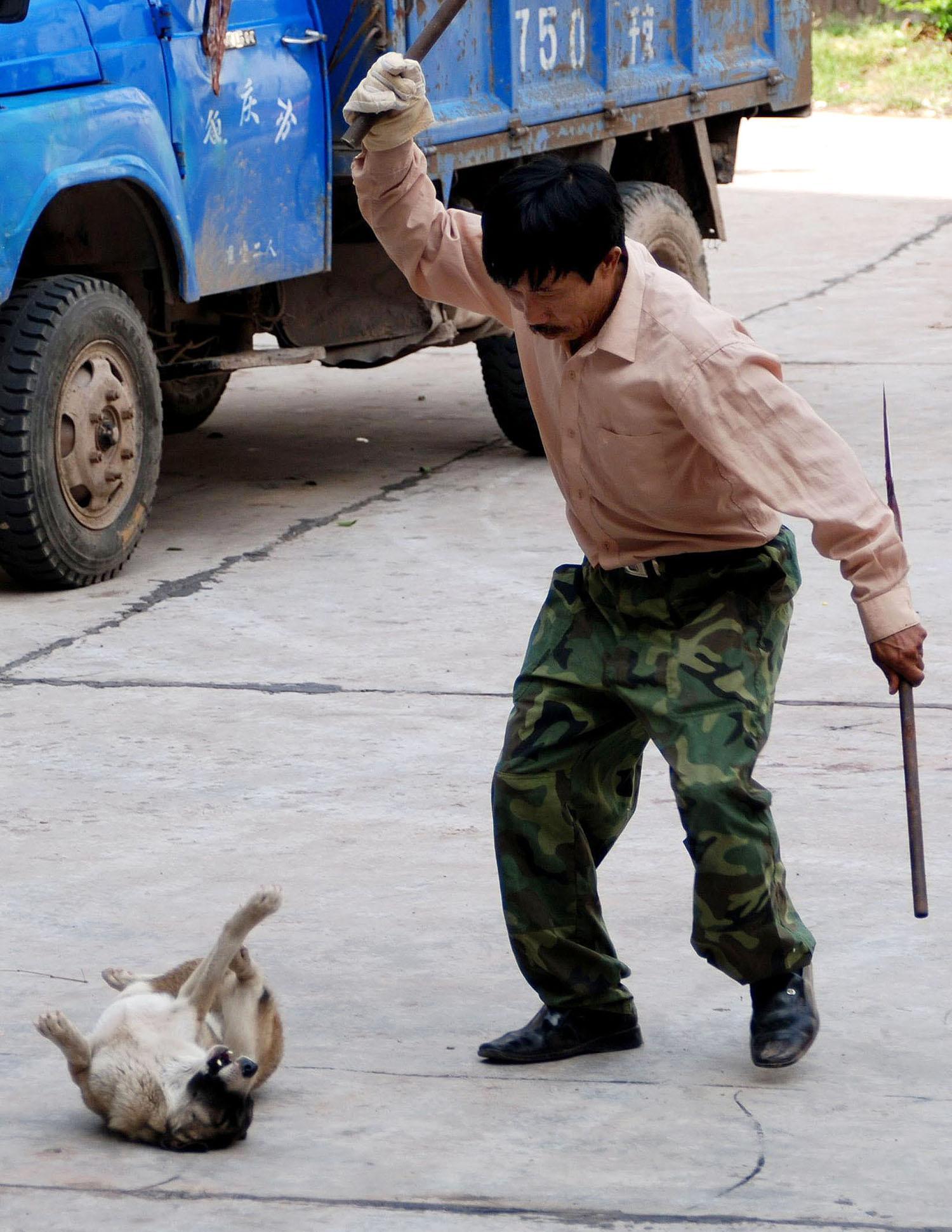 打狗队当街凶残打狗,这一棒打出许多问题。(法新社)