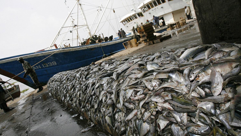 中国的拖网渔船捕获量极大,严重威胁渔业资源和海洋栖地。(法新社)