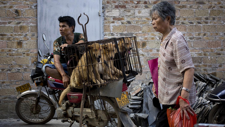 中国是流浪狗大国,也是狂犬病高发国。(美联社)