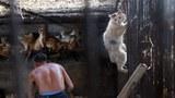 猫咪露出惊恐神情,一但被猫贩子抓笼进后,猫肉上餐桌,猫皮进了衣柜。