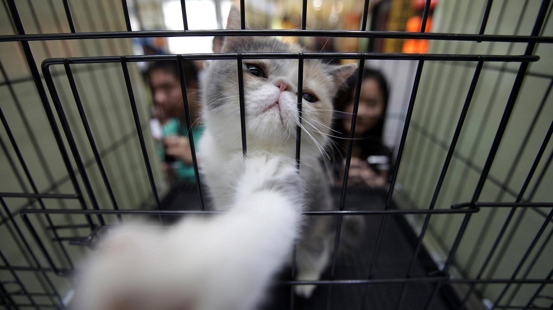 相較國外盛行領養動物,中國寵物主以購買爲主要型態。(路透社)