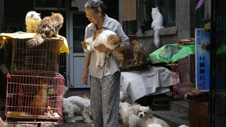 動保人士推估,中國城鎮的流浪貓少說有上億隻。(路透社)