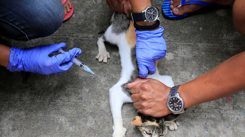 中國犬貓的狂犬病疫苗接種覆蓋率不升反降,疫苗公司扯上圖利疑雲。(路透社)