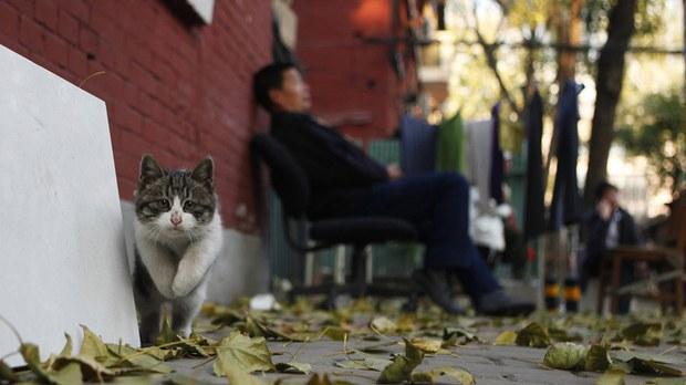 專欄 | 綠色情報員:被消失的貓(下) 荒腔走板的寵物潮