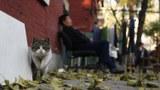 隨着寵物經濟崛起,貓成爲新世代的寵兒,也衍生流浪貓問題。