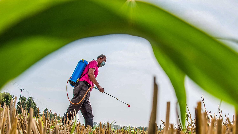 """在""""農民免責權""""的保護傘下,中國農民的方便之門大開。(法新社)"""