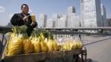 """一顆菠蘿背後扯出""""農業芯片戰"""",臺灣培育的""""金鑽鳳梨""""早在中國落地生根。"""