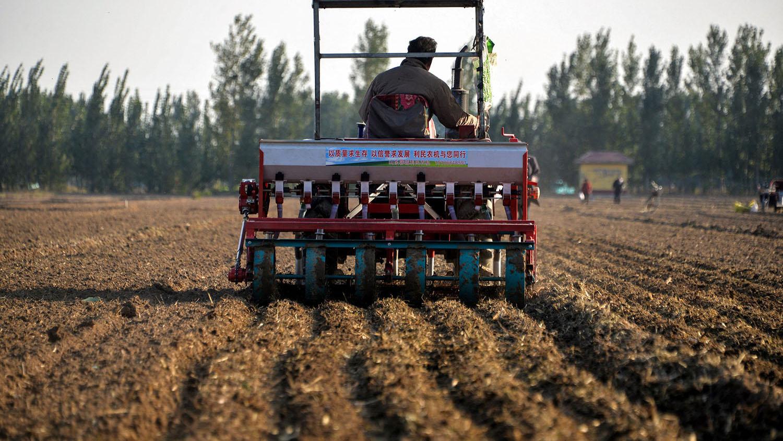 """中国的化肥使用量约占全球总量的三成,化肥也间接为海洋""""施肥"""",助长海星激增。(法新社)"""