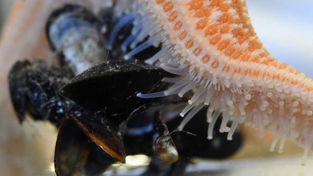 专栏 | 绿色情报员: 海底蝗虫入侵 谁在搅局?