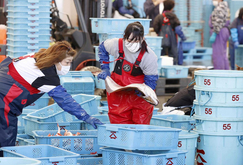 日本渔民担心核废水波及渔业。(路透社)