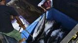 血汗海鲜成为国际关注话题,中国渔船频频被东南亚渔工指控强迫劳动。