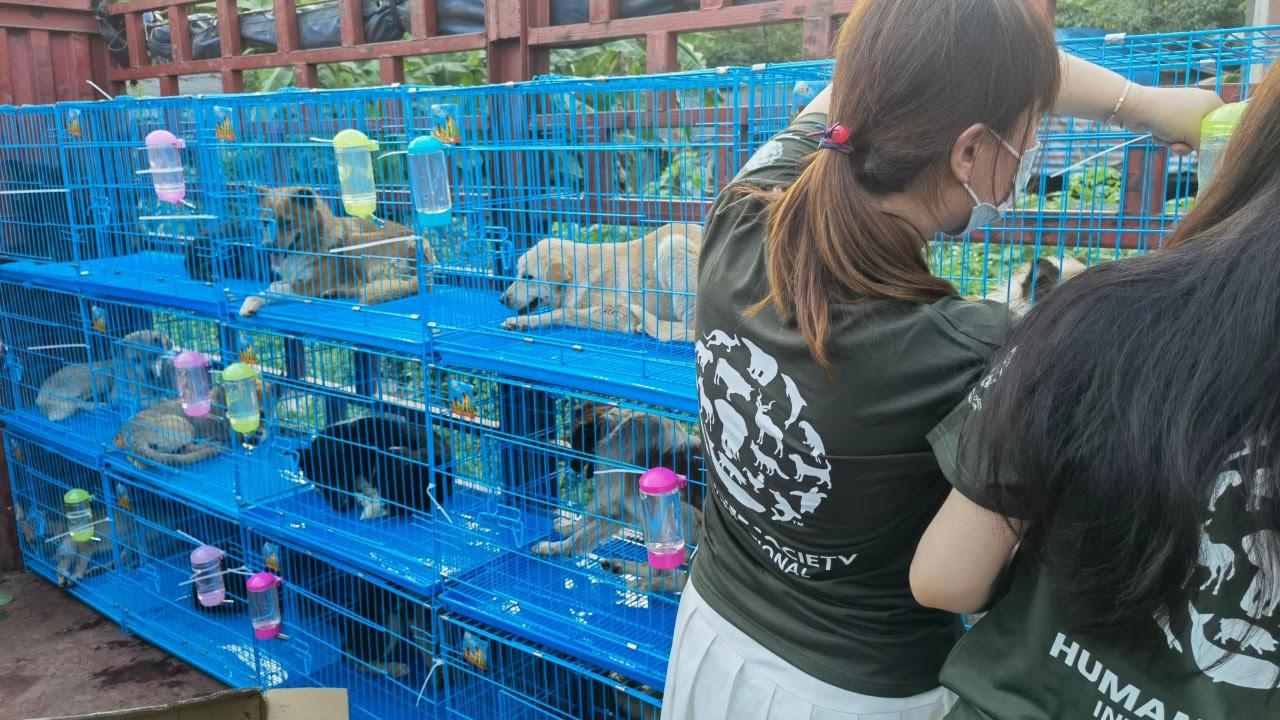 中国动保人士从运狗车救出气息奄奄的狗,送往收容所安置。(国际人道协会提供)