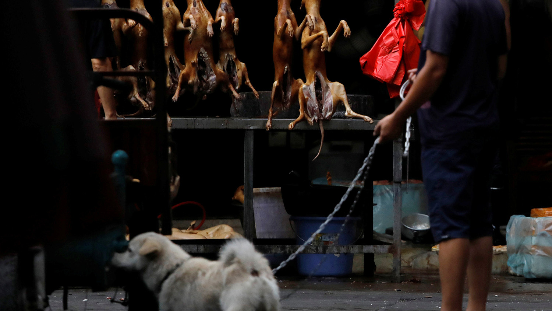 """全面杜绝狗肉产业链,中国将可大幅提高""""可爱""""指数。(路透社)"""