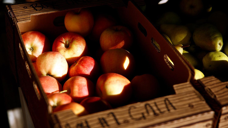 意大利研究团队发现,苹果的微塑料含量远高于莴苣、红萝卜。(路透社)