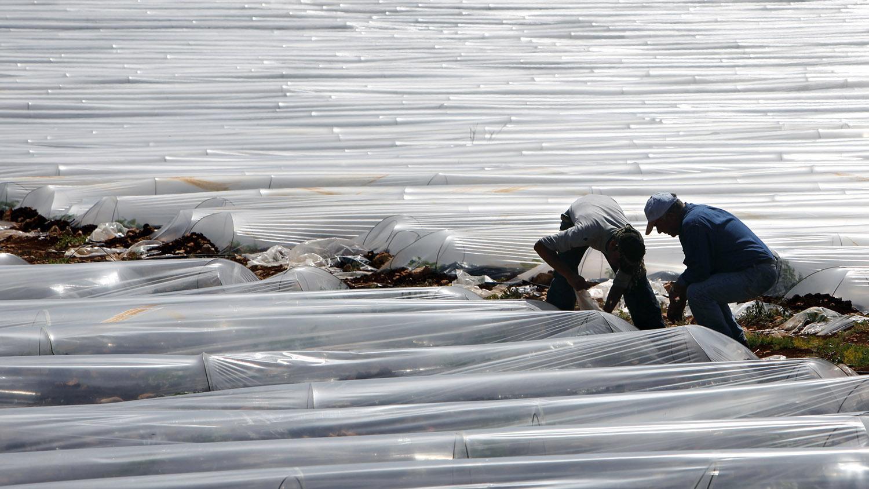 """农用地膜掀起""""白色污染""""议题,全球近9成地膜覆盖在中国。(美联社)"""
