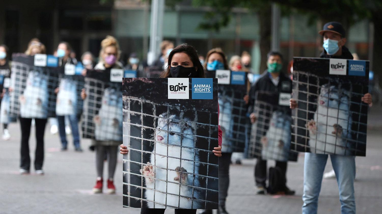 新冠肺炎殃及水貂,欧洲动保人士走上街头,要求关闭养殖场。(路透社)