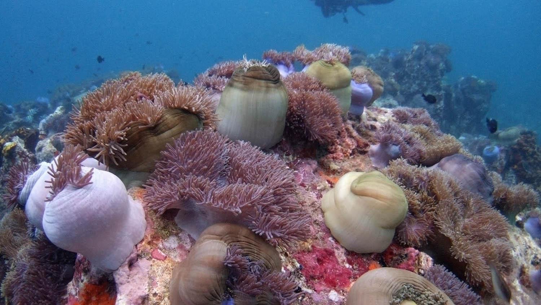 南海孕育丰富多样的珊瑚礁资源。(路透社)