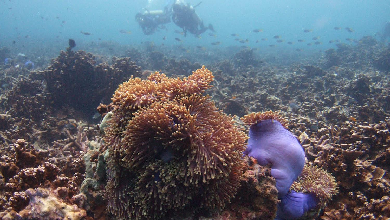 中国喊出种珊瑚,不過,珊瑚被破坏的速度,远不及复育的速度。(路透社)
