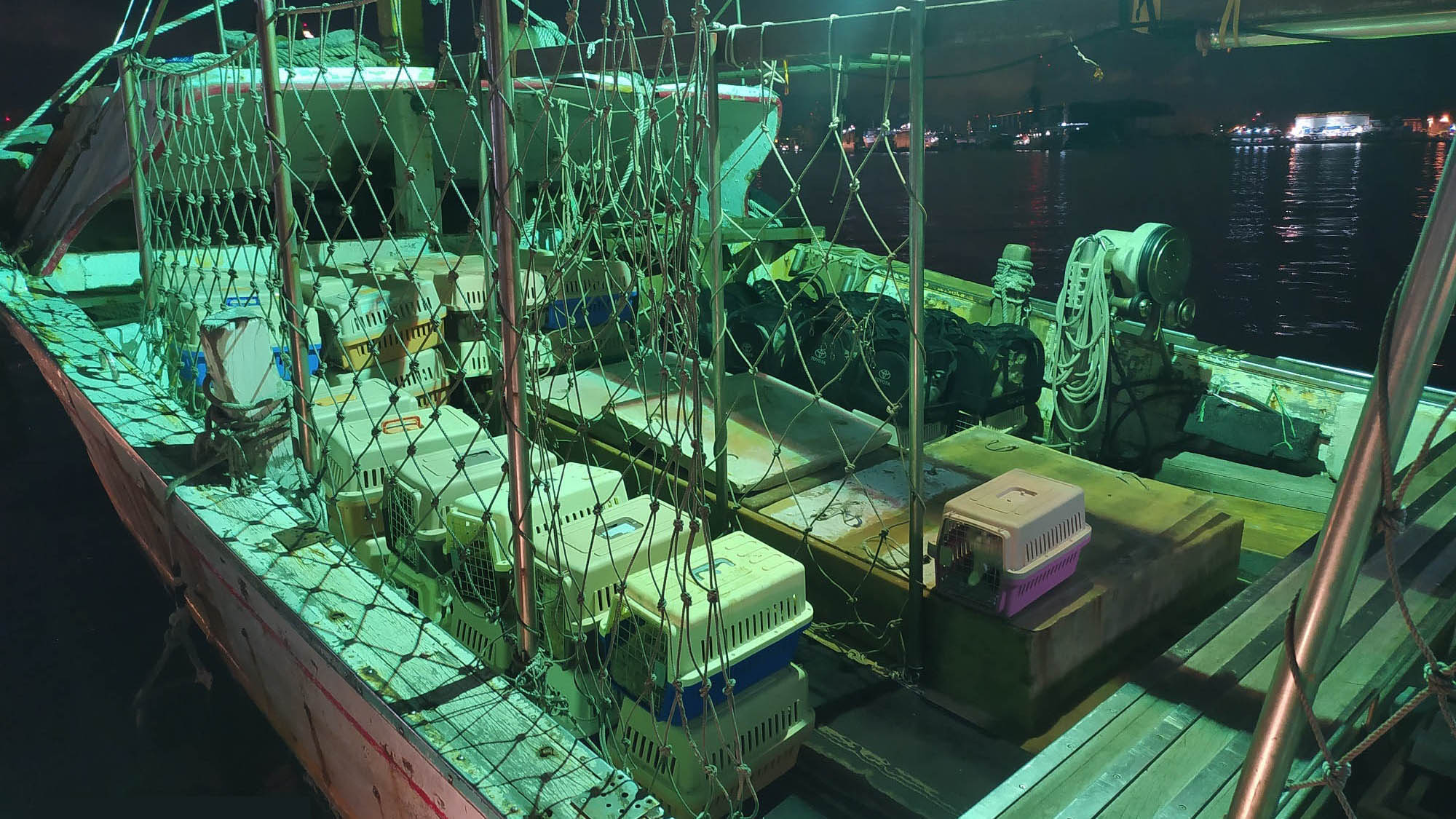 8月底台湾渔船从中国走私大批品种猫,循线追踪,合法繁殖商涉嫌下单。(台湾海巡署提供)