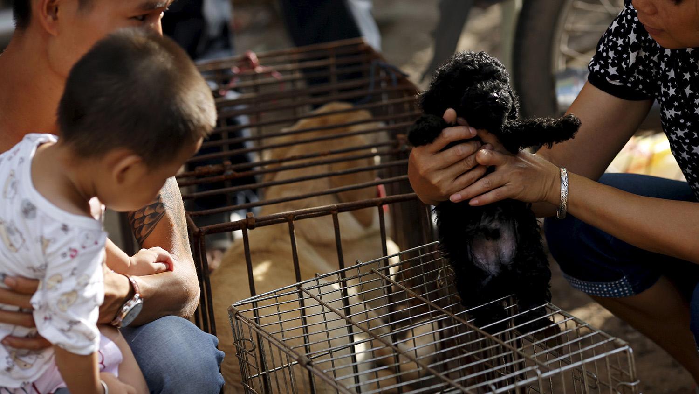 """中国宠物市场常有活不久的""""星期猫""""或""""星期狗"""",这些宠物大多来自非法繁殖场。(路透社)"""